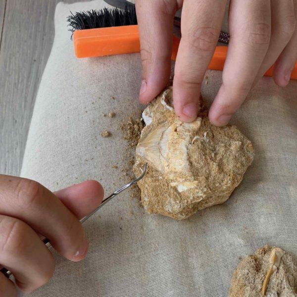Aven grotte forestière atelier fossile gros plan